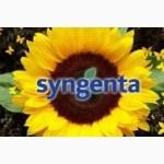 Семена подсолнечника Syngenta (Сингента).Каталог гибридов $цены