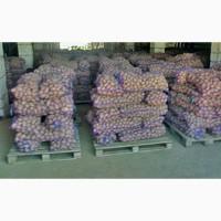 Продам картоплю в оптових об#039;ємах продам картоплю оптом