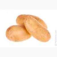 Продам картофель Гренада опт Продажа картофеля сорт Гренада. В наличии большие объемы