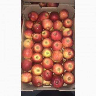 Продам яблоки разных сортов, смарт фреш