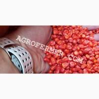 Семена кукурузы CATALINA канадский трансгенный гибрид