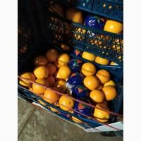 Апельсин та Грейфрут (грейпфрут) від імпортера / грей (грейпфрут) и апельсин от импортера