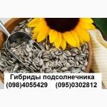 Урожайные гибриды Лимагрейн, Сингнета, Пионер, Нови Сад, Джи Хост