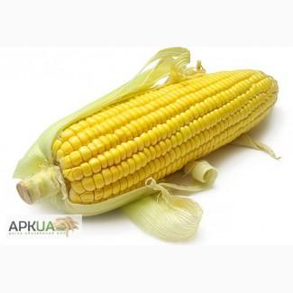 Производим приёмку С/Х продукции Кукурузу