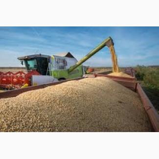 Продам пшеницу до 500 т