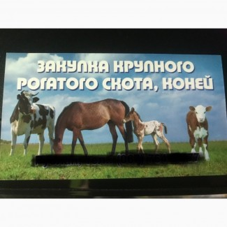 Заготовля-закупка скота та коней корів, бичків, телят