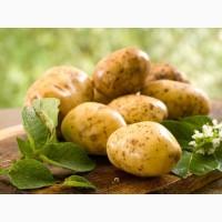 Продажа большим количеством Картофеля