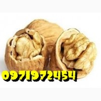 Продаем грецкий орех кругляк бойный хорощего качества
