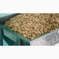 Предприятие принимает заказы на Экспорт ядра грецкого ореха 2018