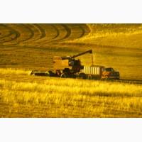 Закупаем оптом пшеницу