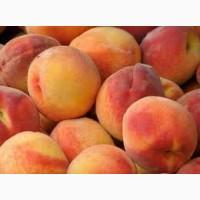 Продаются персики.Ранний, средний и поздний