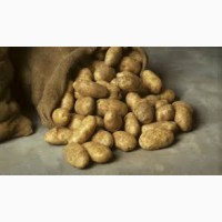 Срочно продам картофель, Чернигов