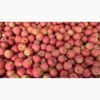 Яблоки оптом зимних сортов, Днепр