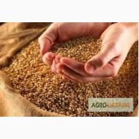Закупаем зерновые, масличные, бобовые и технические культуры