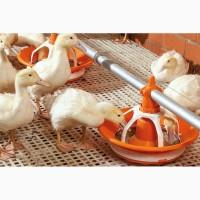 Пластиковые полы для бройлеров курей, щелевые полы для птичника, пластиковый пол для птиц
