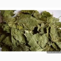 Куплю сухий лист смородини