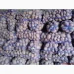 Продам картоплю/ Крупним оптом/ Сорт Галла, Біла Роса