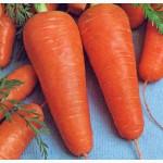 Продам семена моркови Курода Шантане