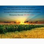 КУПЛЮ Ячмень, Пшеницу, Кукурузу и Подсолнечник