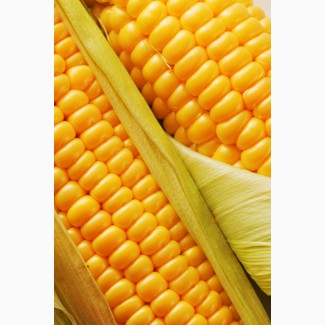 Купим кукурузу(Фуражную)