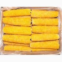 Кукуруза сладкая початок бланшированная