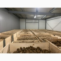 Продам Картоплю (Польща)м.Lodz Оптом од 20т