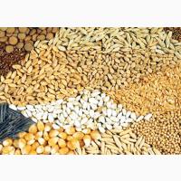 Продам Зерновые   Закупить Зерно Украина