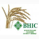 Пшеница спельта 100 т