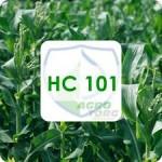 НС 101 кукуруза Нертус