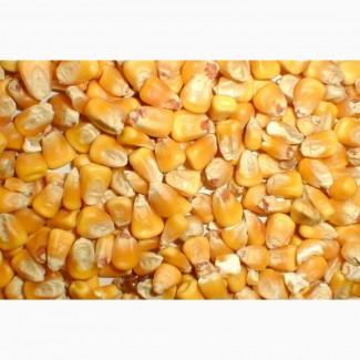 Купим кукурузу.Есть самовывоз