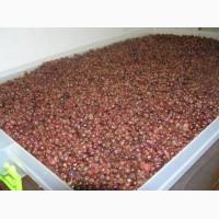 Сушені ягоди
