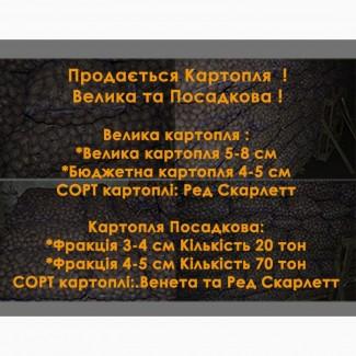 Продається Картопля Велика та Посадкова
