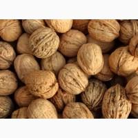 Куплю грецький горіх, кругляк бойний, ціна залежить від якості горіха
