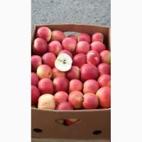 Продам яблуко сорт айдаред загазованый