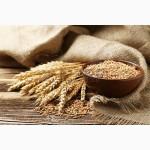 Продам кукурузу семечки ячмень пшеница
