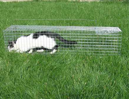 Фото 2. Живоловушка. Клетка живоловка на кота. Ловушка для кошки безопасная