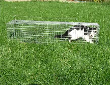Фото 3. Живоловушка. Клетка живоловка на кота. Ловушка для кошки безопасная