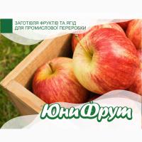 Яблоки покупаем для промышленной переработки оптом от 25 тонн