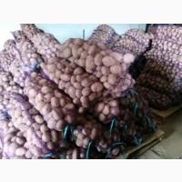 Продам товарный картофель, большой опт