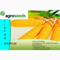 Продам Гибрид кукурузы Плевен, F1, (Maisadour Semences)
