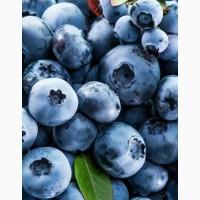 Продам голубику (лохину) свежая ягода
