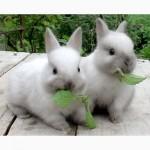 Комбикорм для кролей К 91-1