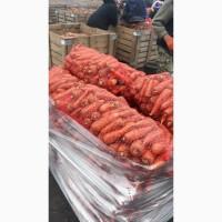 Оптом продам морковь товарную