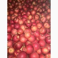 Яблоки промышленная переработка