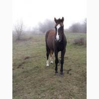 Продам лошадь - молодого жеребца