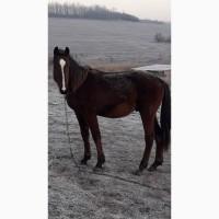 Срочно продам коня