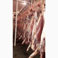 Мясо Говядины в полутушах