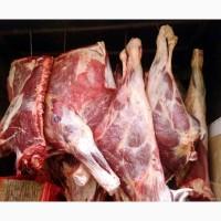 Комбинат Закупает Мясо КРС