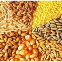 Зерновые (пшеница, кукуруза, ячмень) продажа