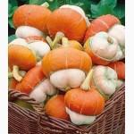 Продам семена Тыква Красный Тюрбан (декоративная)